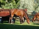 konie-6