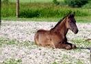 konie-7