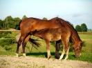 konie-9