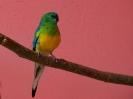 papugi-4